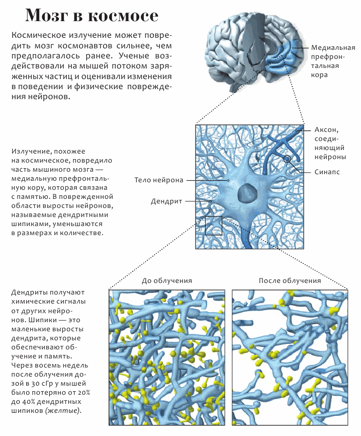 Мозг в космосе