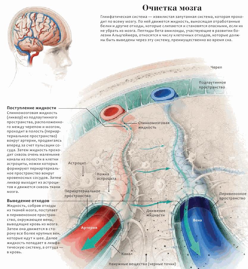 Глимфатическая система