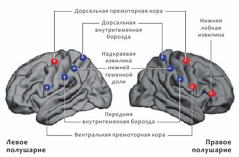 Орудия и мозг