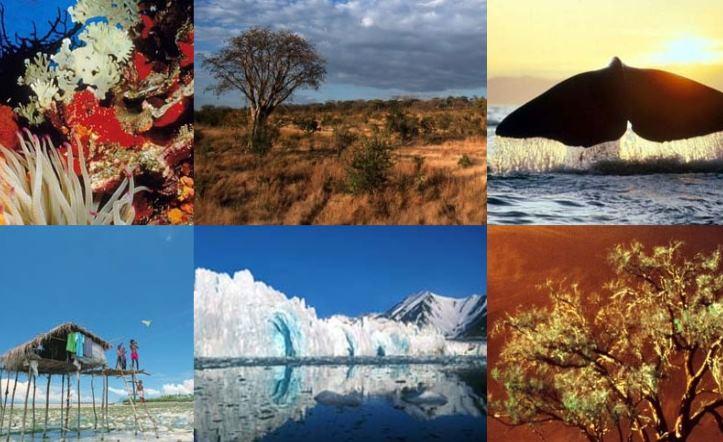 Защита и восстановление экосистем суши