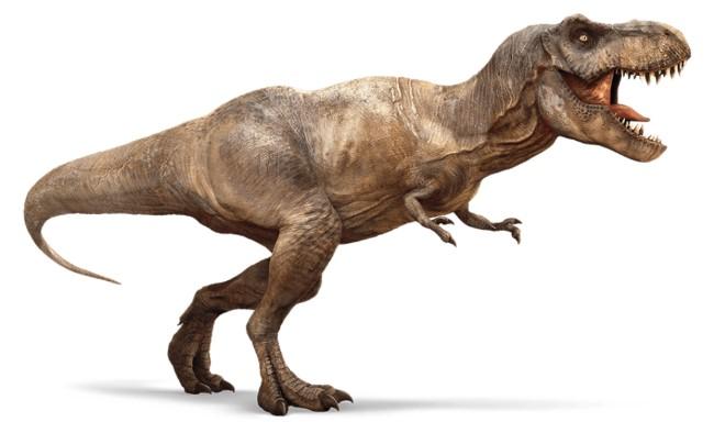 Тираннозавр: факты и фантазии