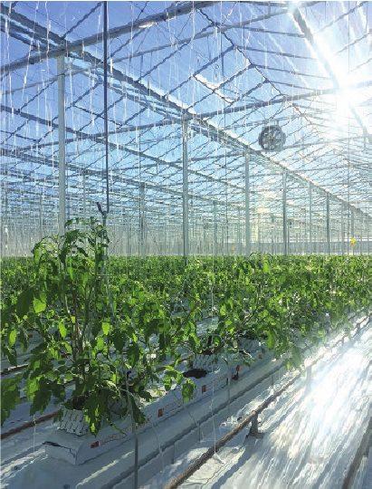 Для отопления теплиц, где выращиваются помидоры, Ванкувер сжигает метан, собираемый со свалок